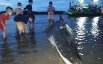 Dân đưa xác cá hơn 1 tấn dạt vào lạch biển Nghệ An đi chôn