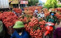 Bất chấp COVID-19, Bắc Giang vẫn bán hết 215.000 tấn vải thiều, thu hơn 6.800 tỉ đồng