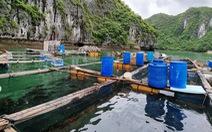 Hải Phòng muốn di dời các hộ nuôi thủy sản trên biển Cát Bà bằng dự án hỗ trợ 68 tỉ đồng