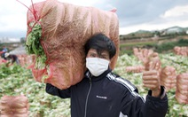 Ngày cắt rau gửi Đà Nẵng, đêm đi tiếp viện TP.HCM