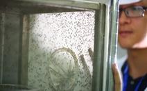 Trung Quốc dùng công nghệ hạt nhân để diệt muỗi