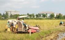 Bạc Liêu nhờ Hậu Giang, Sóc Trăng hỗ trợ thu hoạch lúa