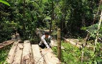 Rừng phòng hộ mất hàng trăm gốc mà chủ rừng 'vô can'