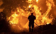 Thủ tướng Hy Lạp xin lỗi vì để cháy rừng như 'ngày tận thế'