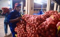Hành tây Lào Cai, bắp cải Đà Lạt... nhộn nhịp đổ về điểm tập kết tại chợ đầu mối Hóc Môn