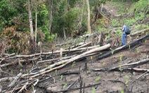 Khởi tố, bắt tạm giam 2 bị can vụ phá rừng phòng hộ ở Phú Yên