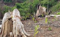 Thường trực Tỉnh ủy Phú Yên yêu cầu kiểm tra thông tin phá rừng Tuổi Trẻ Online nêu