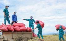 Dân quân tự vệ giúp dân gặt lúa
