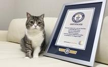 Chú mèo Motimaru ở Nhật lập kỷ lục Guinness được xem nhiều nhất trên YouTube