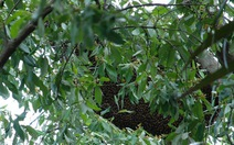 Tổ ong giết người