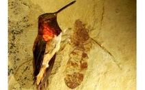 Hóa thạch kiến khổng lồ