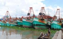 Nhiều tàu cá nằm bờ