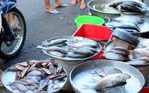 Từ cảng ra chợ: Giá cá tăng gấp đôi