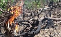 Thiếu đất, dân đốt rừng làm rẫy