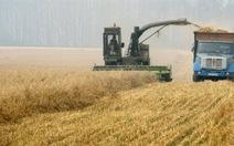 Nga sẽ dỡ bỏ lệnh cấm xuất khẩu ngũ cốc
