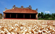 Tour mới Quảng Ngãi: khám phá vùng biển đảo kỳ thú