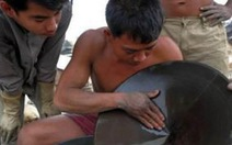 Dân Campuchia đổ xô tìm vàng