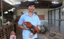Về đất gà Chợ Lách