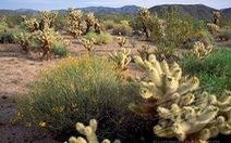 Du lịch sa mạc ở California