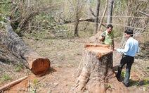 Bức xúc vấn đề bảo vệ rừng, giá thuê đất