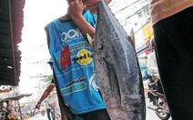Cá biển nào độc?