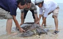 Thả rùa nặng 80kg về biển