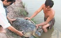 Ngư dân thả con vích nặng hơn 50 kg về biển