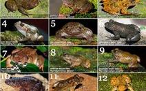 Phát hiện 12 loài ếch mới