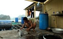 Ăn cá giò trên vịnh Lan Hạ
