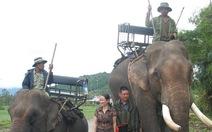 Đừng để voi chỉ còn là ký ức