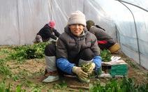 Muôn nẻo mưu sinh xứ Hàn - Kỳ 4: Nghề nông ở đất Hàn