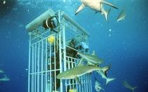 Khu bảo tồn cá mập lớn nhất thế giới