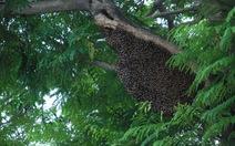 Tổ ong giữa trung tâm thành phố