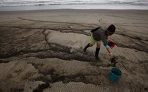 New Zealand tuyên bố thảm họa sinh thái