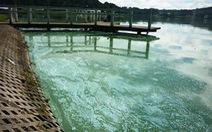 """Đà Lạt: hồ Xuân Hương """"lâm bệnh"""" nặng"""
