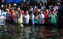 Giá gạo sẽ tăng vọt sau lũ lụt ở Thái Lan?