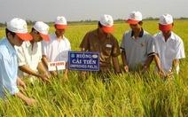 Tập trung quảng bá gạo Việt