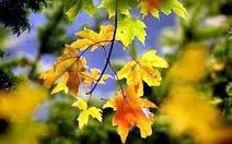 Bắc nhịp trái tim kỳ 148: Mùa thu của anh