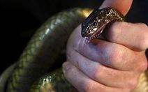 Những loài rắn nguy hiểm nhất thế giới