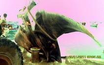Ngư dân bắt được cá nặng gần 2 tấn