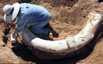 """Voi mamut lông đen khổng lồ sẽ được """"tái sinh""""?"""