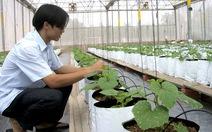 Hạt giống rau nhập khẩu chiếm 80%