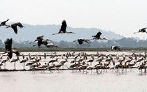 Chim quý xuất hiện dày đặc trên đồng