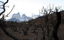Chile: du khách bị bắt vì gây cháy rừng