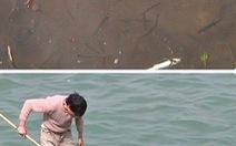 Trung Quốc: cá chết hàng loạt trên sông