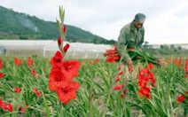 Thăm làng hoa layơn Hiệp An