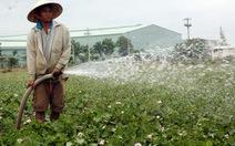 Đất trồng lúa mất dần