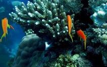 Các đại dương đang bị axit hóa nhanh chưa từng thấy