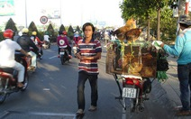 Mặc H5N1, gia cầm vẫn bán đầy đường