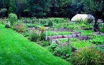 Tươi ngon vườn rau nhà hàng